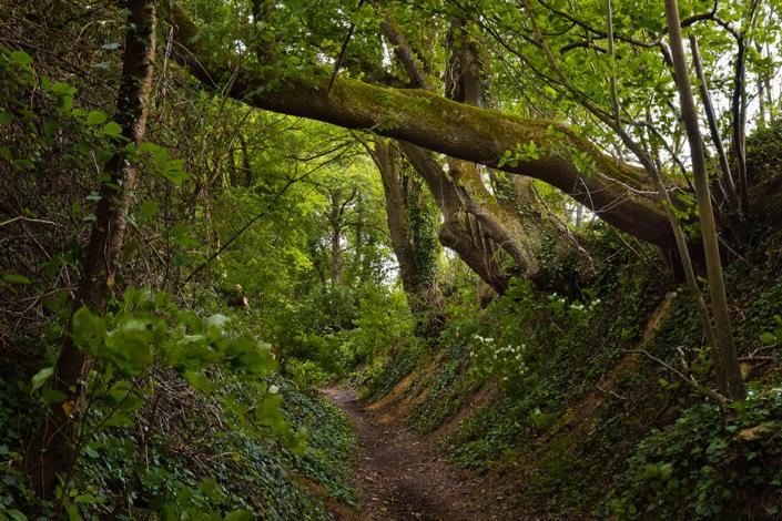 Nos adentramos en el bosque (concejo de Aller)