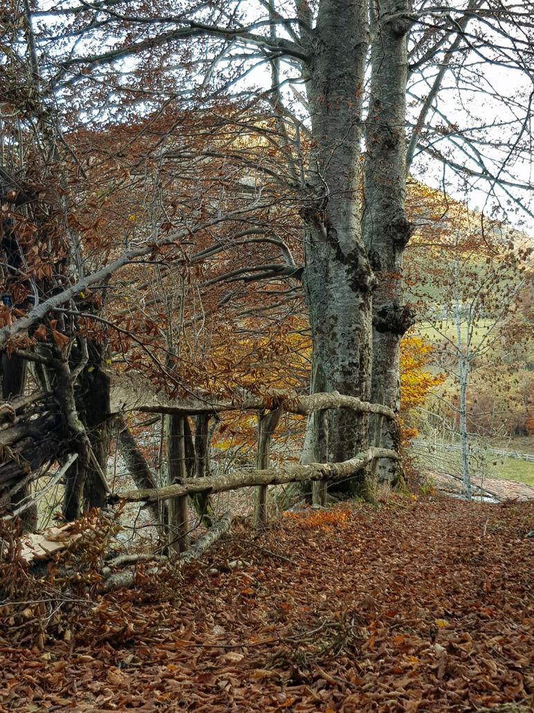 Ruta Las Brañas (concejo de Aller)